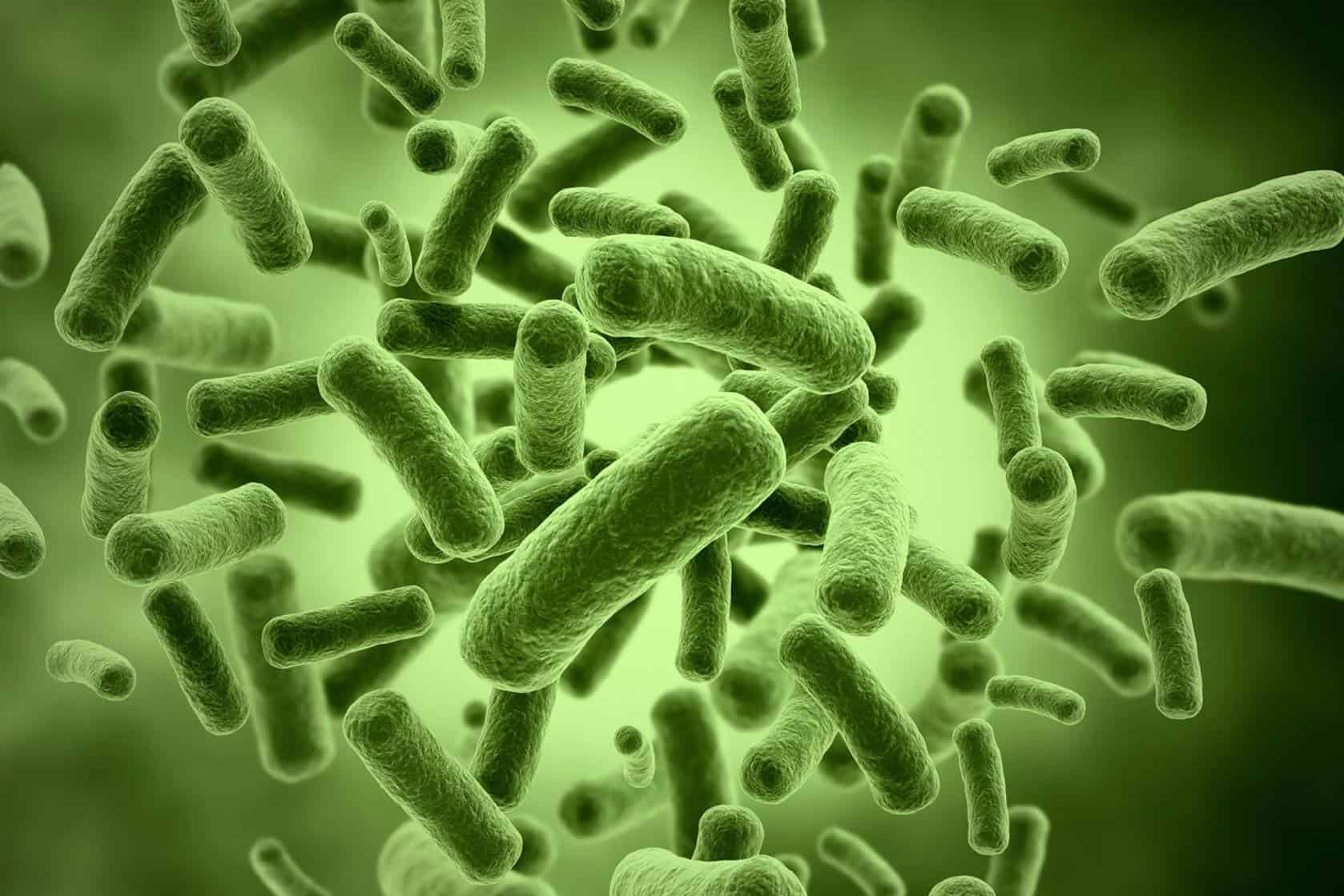 microscopic close-up of green bacteria